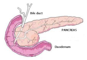 pancreas-figur1a